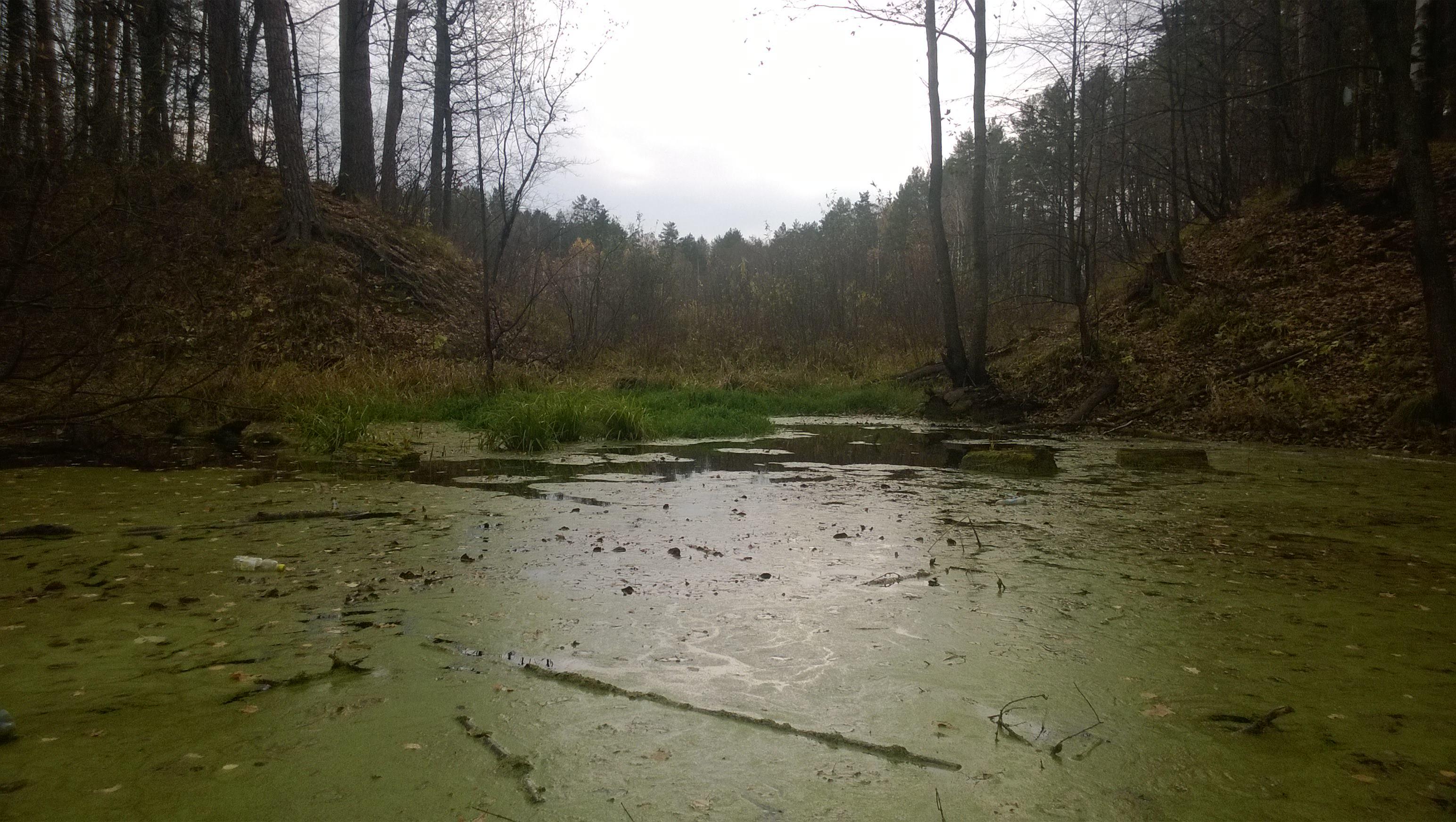 «Заболоченный водоём в лесу»